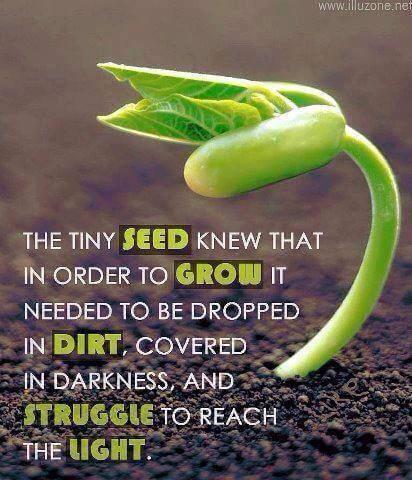 tiny_seed